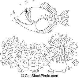 Trigger fish - Black and white vector illustration of an...