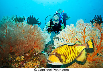 Triggerfish and diver - Underwater landscape with...