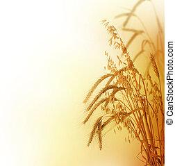 trigo, borda