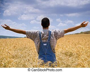 trigo, braços, campo, espalhar, agricultor, saída