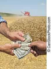 trigo, cosecha, Agricultura