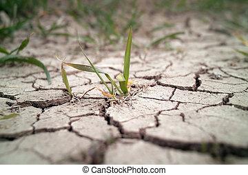 trigo, en, sequía, campo