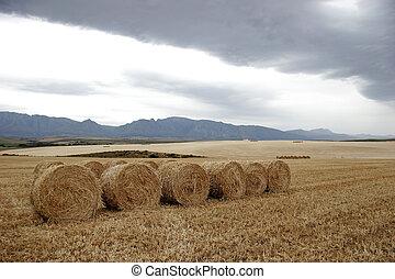 trigo, fardos