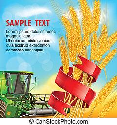 trigo, fita, orelhas