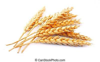 trigo, isolado