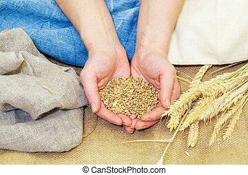 trigo, mãos humanas