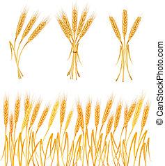 trigo, maduro, amarillo, orejas