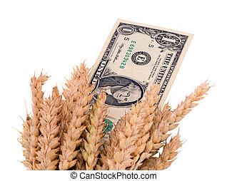 trigo, maduro, colheita, orelhas, eua, dólar, dinheiro, nota