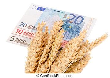 trigo, maduro, colheita, orelhas, euro notas, isolado