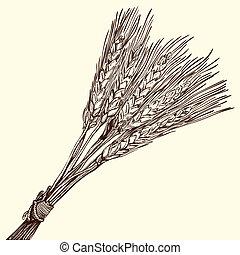 trigo, maduro, grupo