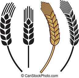 trigo, oreja, icono, conjunto