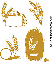 trigo, orejas, conjunto