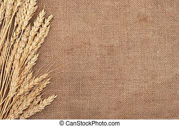 trigo, orejas, frontera, en, arpillera, plano de fondo