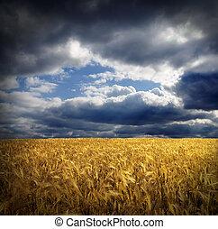 trigo, oro, campo de cielo, dramático, debajo, agujero,...