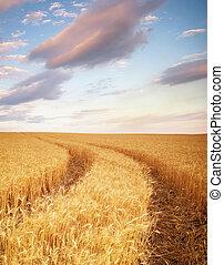 trigo, prado