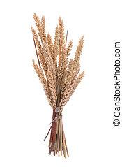 trigo, rama