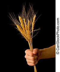 trigo, regalo, presentación, granjero, Agricultura, ramo