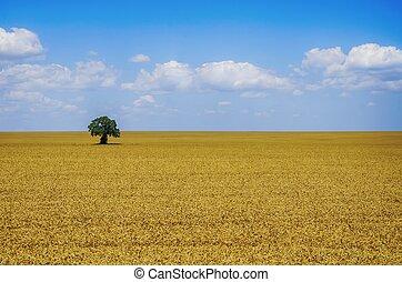 trigo, verão, campo