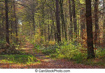 trilha hiking