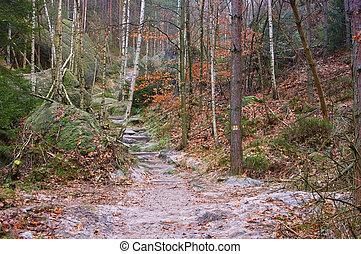trilha hiking, em, a, elbe, arenito, montanhas