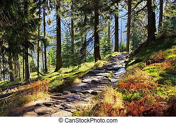 trilha hiking, em, gigante, montanhas