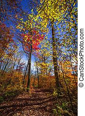trilha hiking, em, outono, floresta