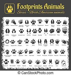 trilhas animais, -, norte-americano, animais