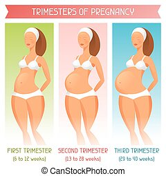 Trimesters of pregnancy. Illustration for websites, magazines and brochures