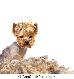 Trimmed dog