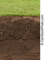 cross section of a grass lawn with exposed soil below