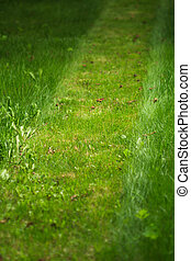 trimmed lawn path