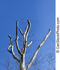 Trimmed Tree - Trimmed tree branches with a sky background