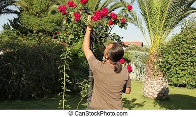 trimming - brunette man pruning red rose and giving