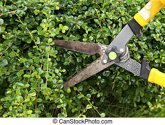 trimming bushes with scissors - trimming bushes with garden...