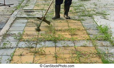 Trimming Grass. Grass cutting service
