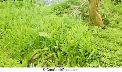 Trimming grass in the garden