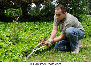 Trimming Plants Outside
