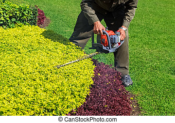 Trimming shrub with Hedge Trimmer - A man trimming shrub...