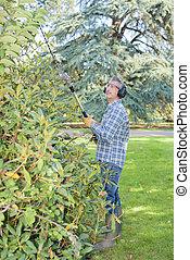 trimming the shrub