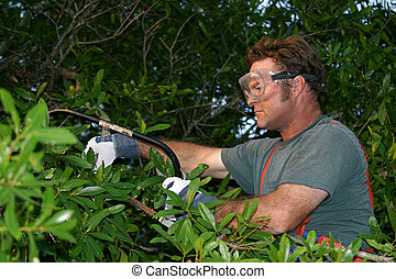 A worker, in safety gear, trimming a tree with a saw.