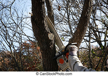 Trimming tree - Trimming tree with electric saw -...