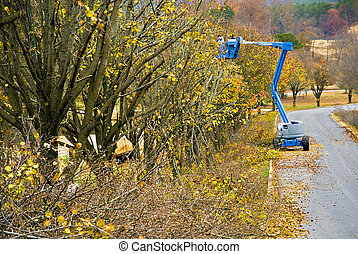 Trimming Trees - Trees along a road getting trimmed in the...