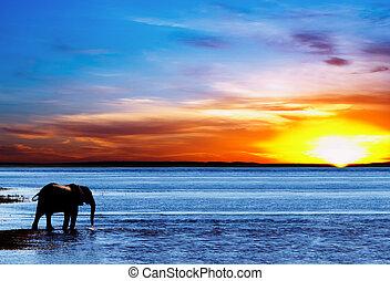 trinken, elefant, silhouette