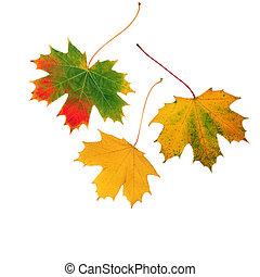 trio, feuilles