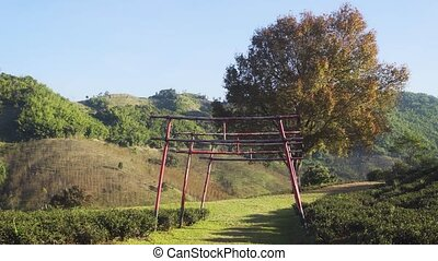 Three red torii gates, constructed of lashed bamboo, span a pathway on a tea plantation in the hills of Chiang Mai. FullHD stock video