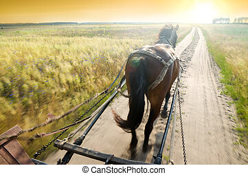 Trip on a cart with a horse on rural road