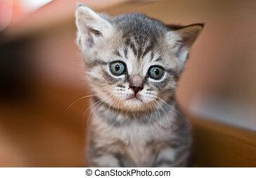 triste, chaton