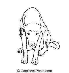 triste, chien, errant, dessin