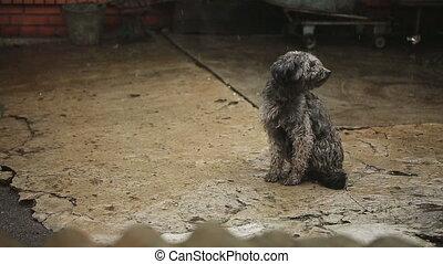 triste, chien, pluie, mouillé