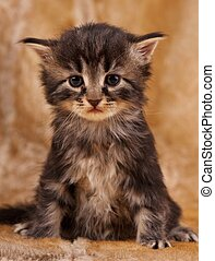 triste, gatito